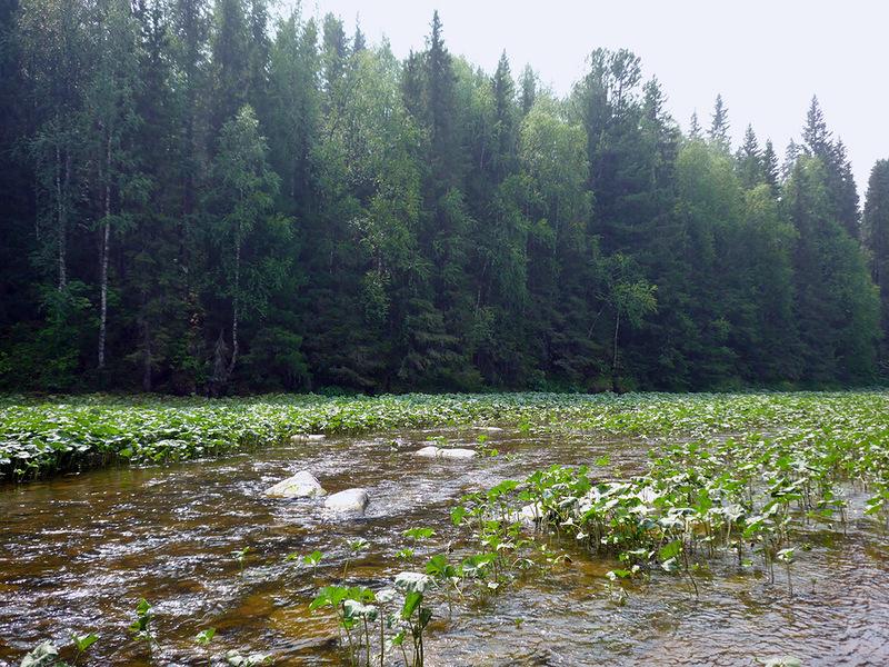 Река Вижай летом, Пермский край